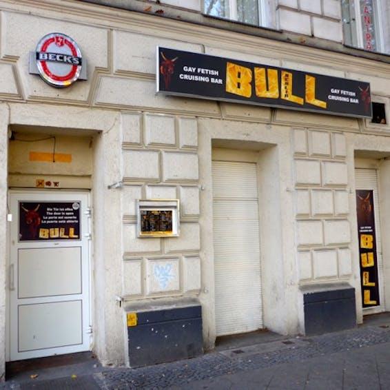 Photo of Bull