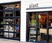 Photo of Plant